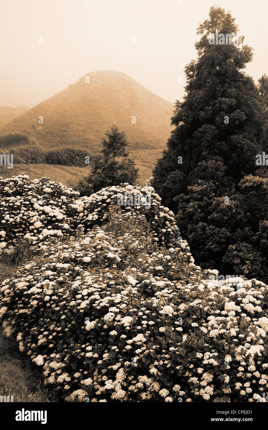Sepia toned landscape with hydrangeas, in Azores islands, Portugal. - Stock Image