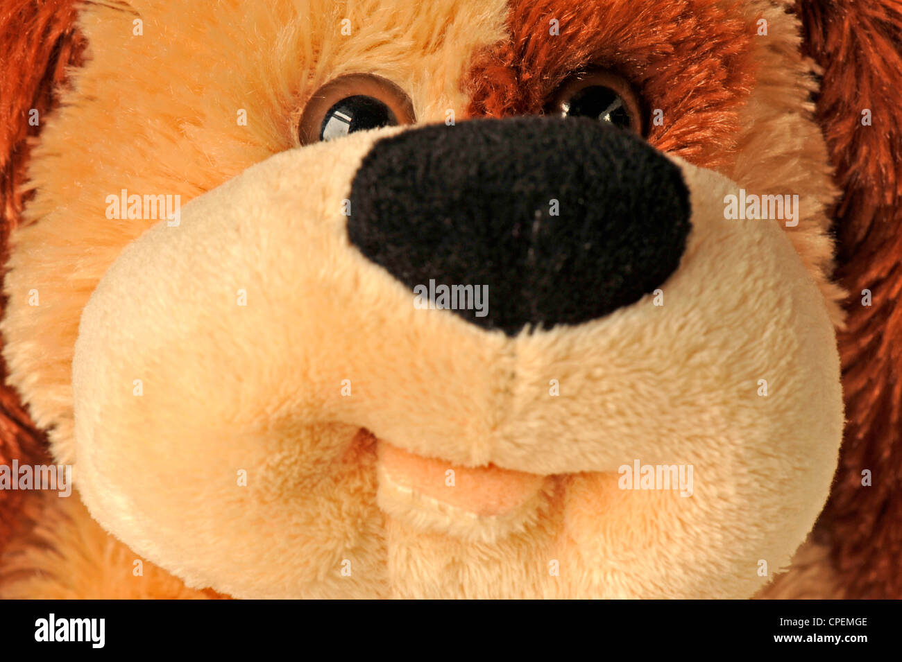 Close-up of a soft toy dog's face - Stock Image