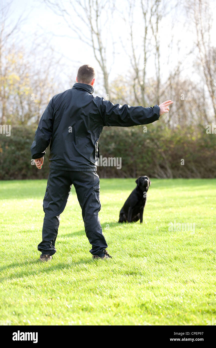 A Police dog trainer training a new dog, asking him to fetch an item thrown into the distance - Stock Image