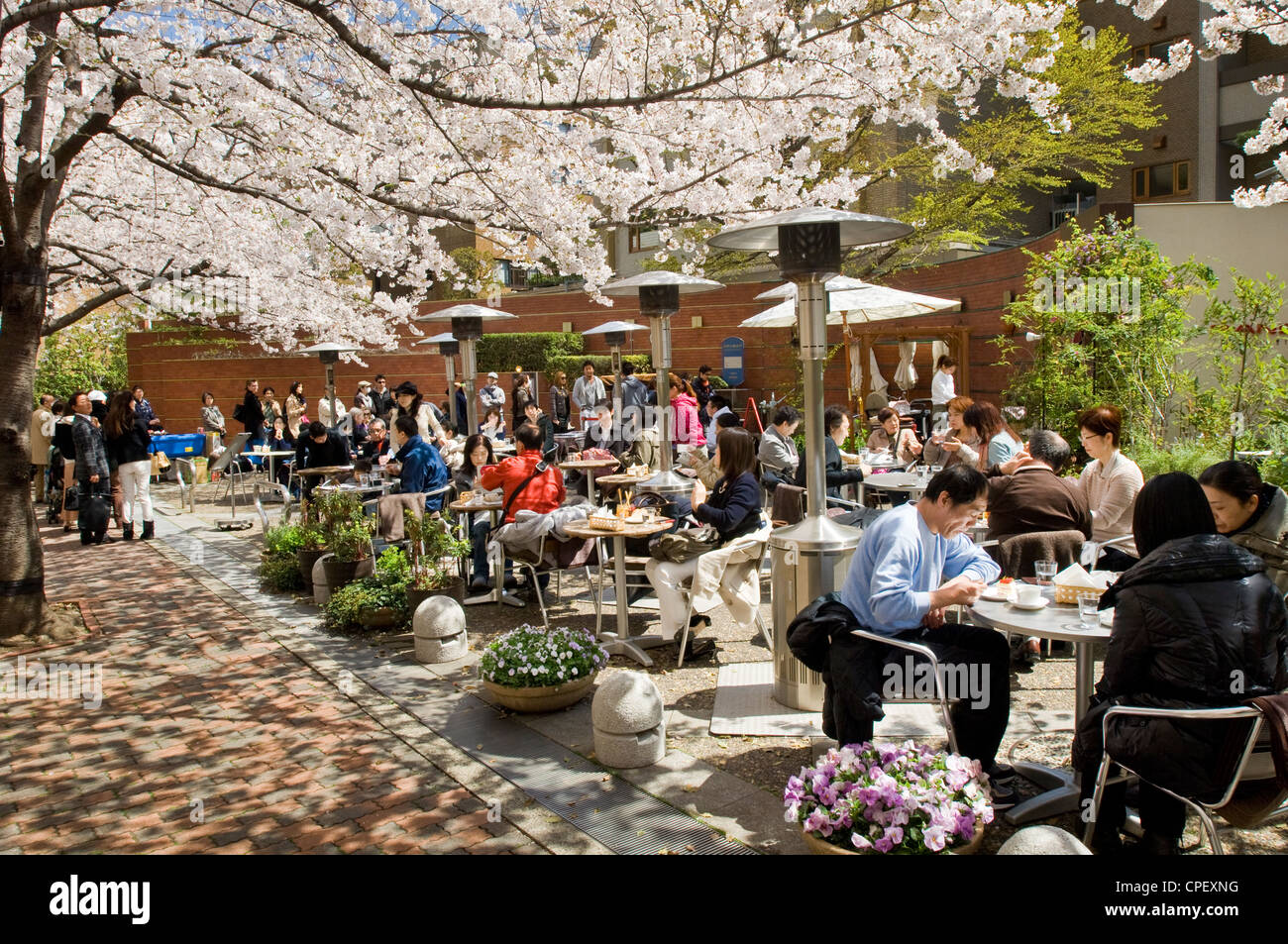 People enjoying the sakura cherry blossoms at an outdoor cafe in central Tokyo, Japan - Stock Image