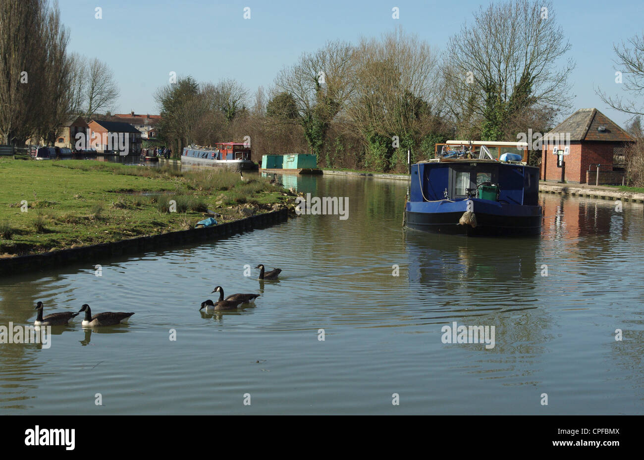 A barge travelling along the Grand Union Canal at Cosgrove, Canada Geese in the foreground - Stock Image
