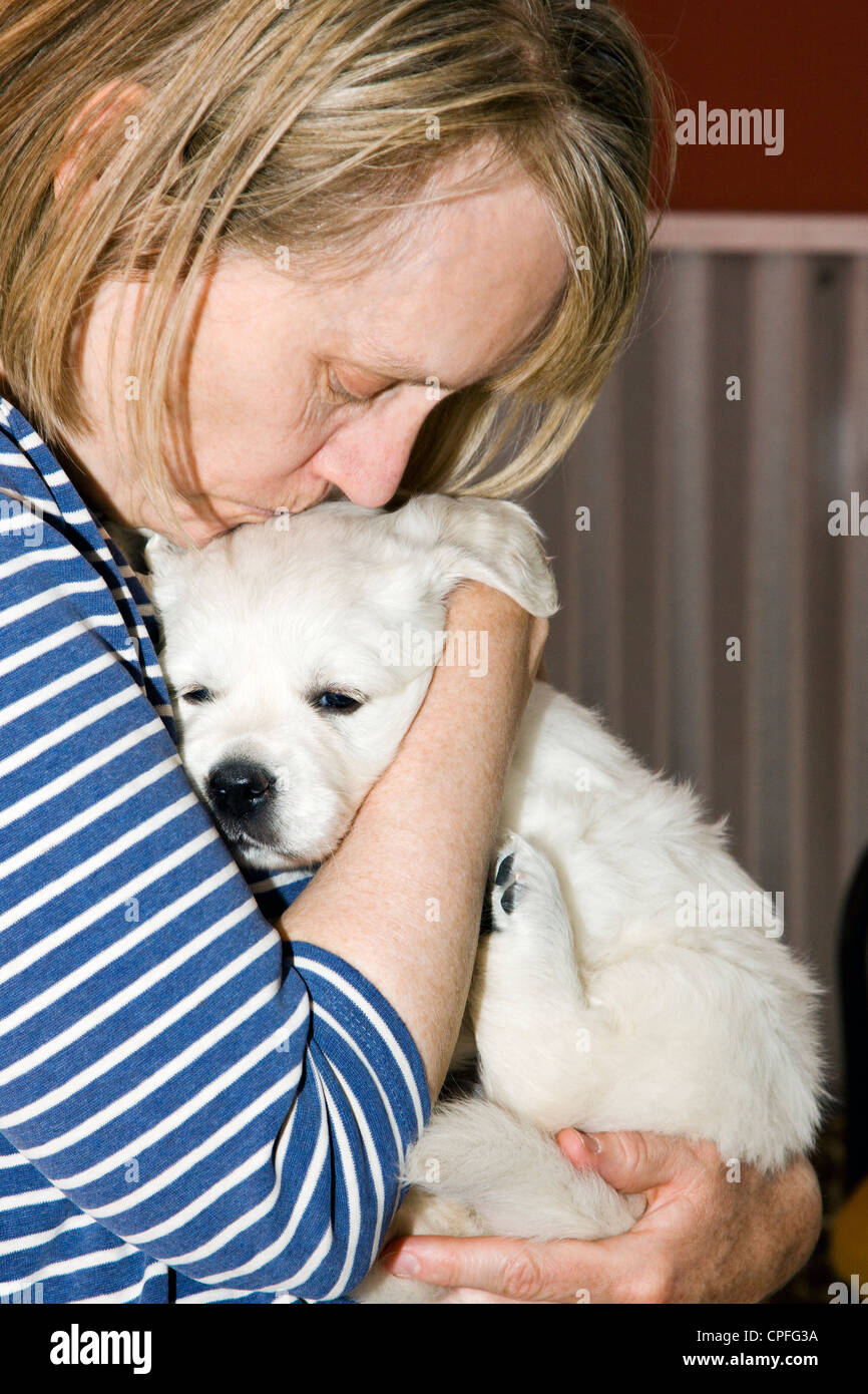golden photo piglet teacup retriever with platinum playing stock days colored young puppy
