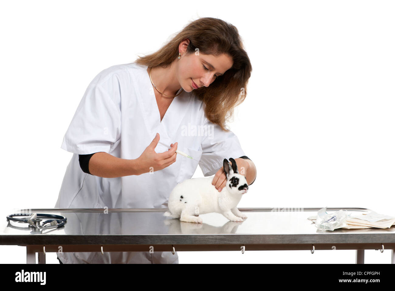Vet giving injection to Dalmatian rabbit in front of white background - Stock Image