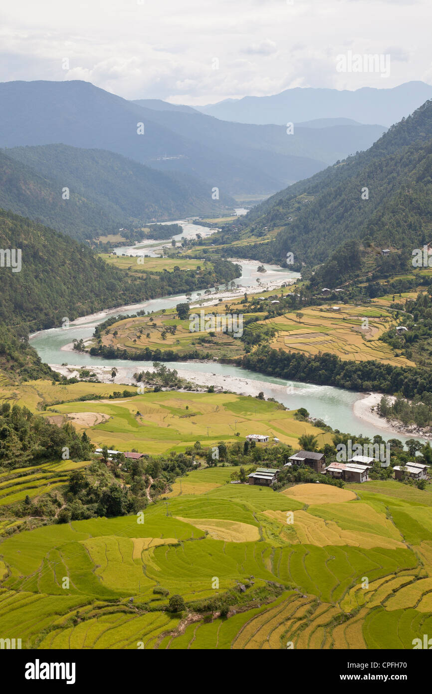 Rice fields and the Mo Chhu river in the Punakha valley, Bhutan. - Stock Image