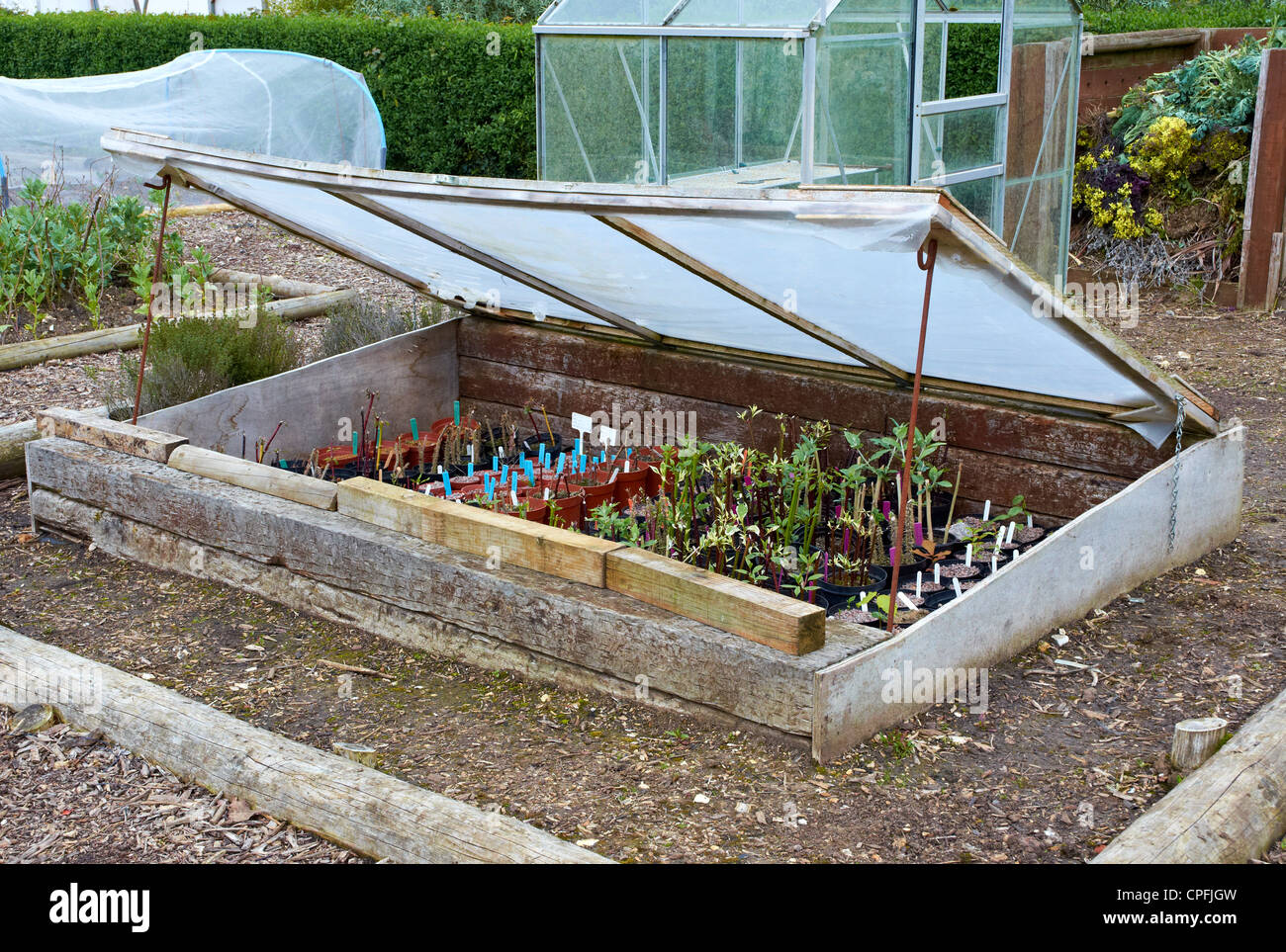 Garden cold frame constructed from scrap wood and polythene with ...