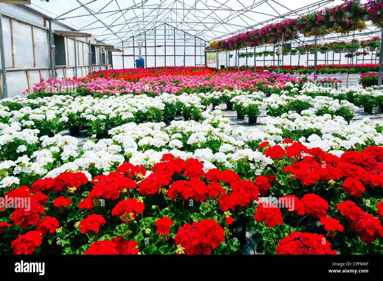 Fresh spring flowers for sale at a small town nursery. - Stock Image