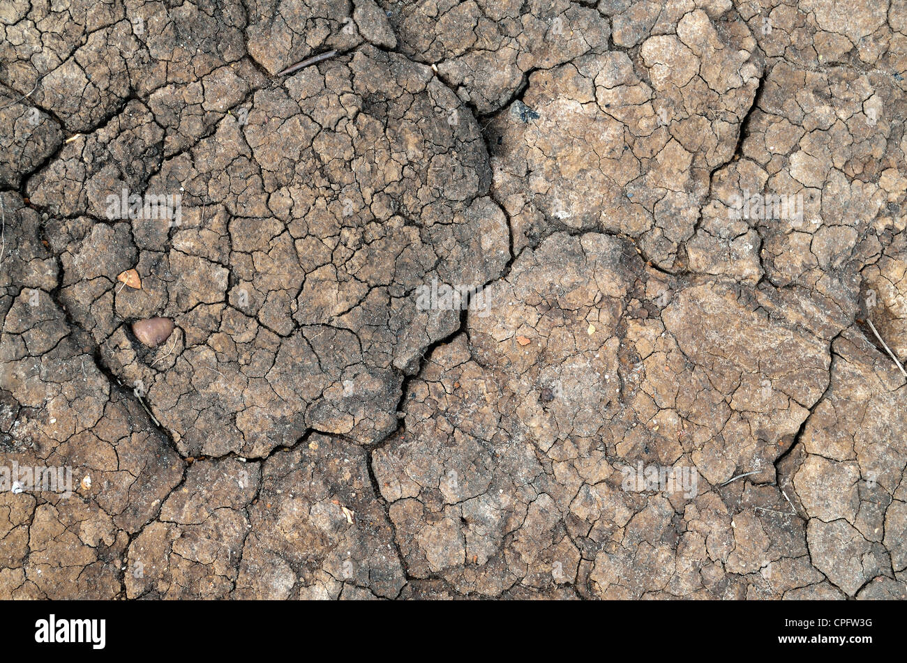 Dried and cracking mud texture from the seashore - Stock Image