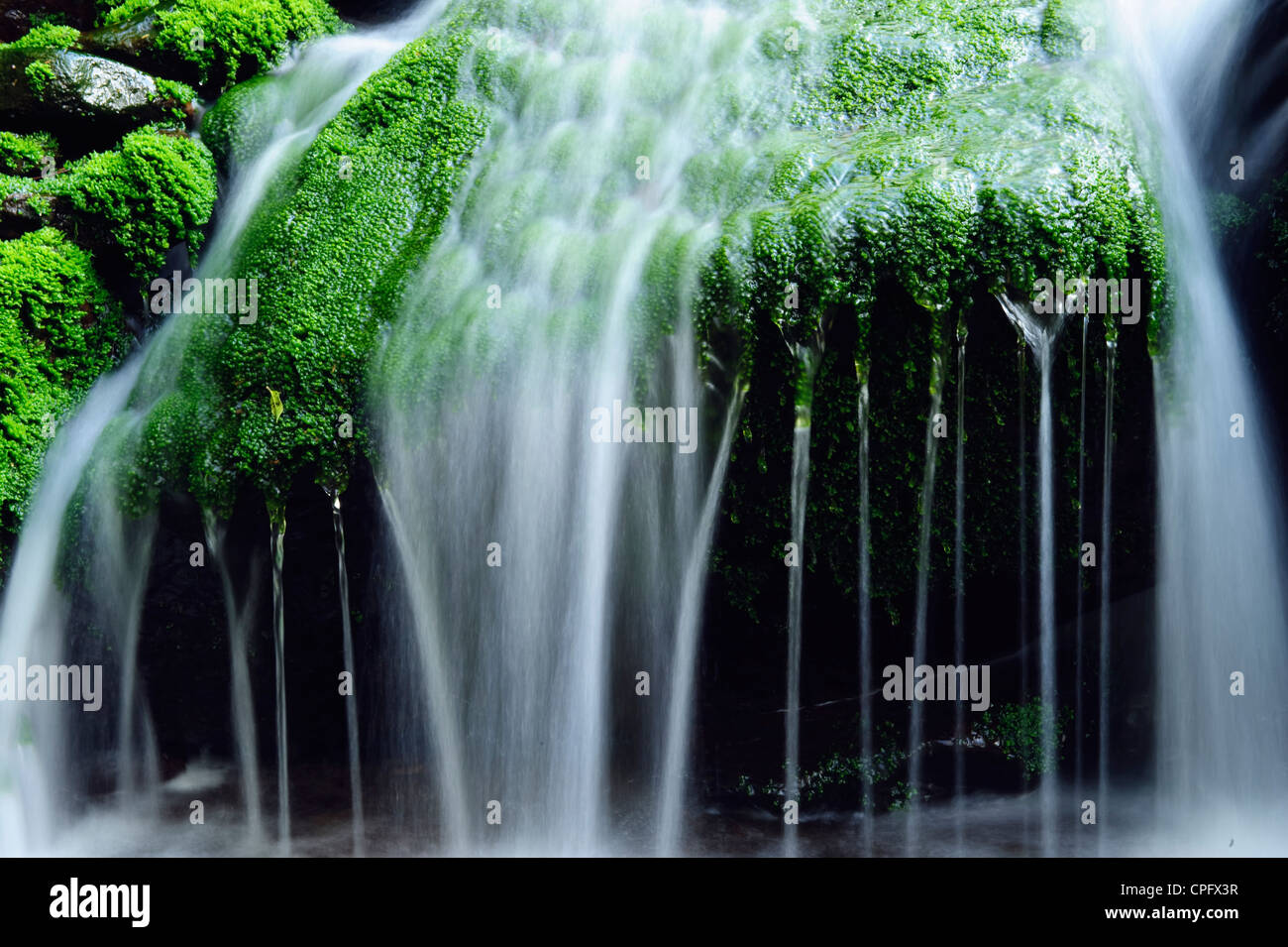 Cascade in Black Clough in the Forest of Bowland Lancashire England - Stock Image