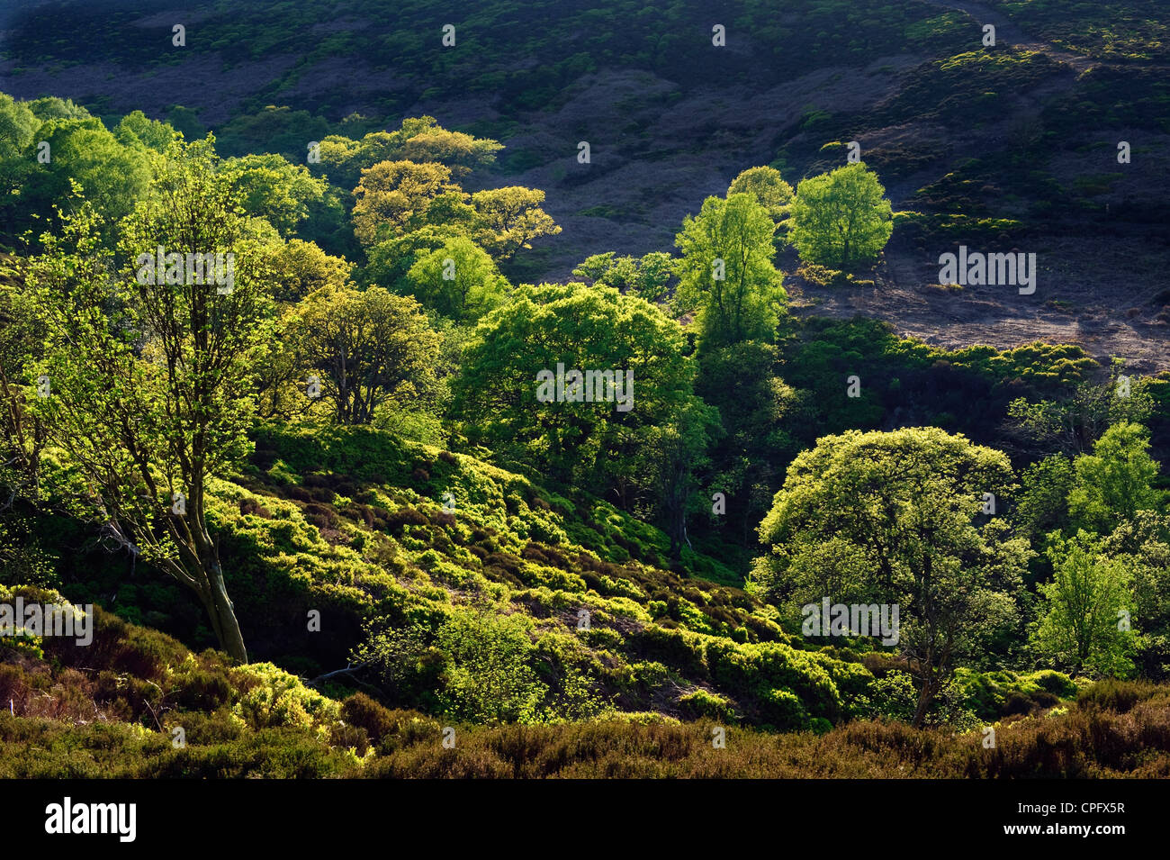 Looking down at Black Clough in the Forest of Bowland Lancashire England in springtime - Stock Image