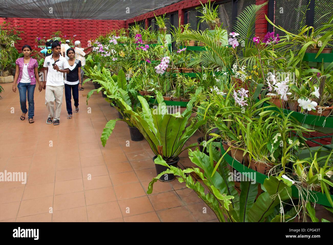 House Garden Pictures In Sri Lanka Garden Ftempo