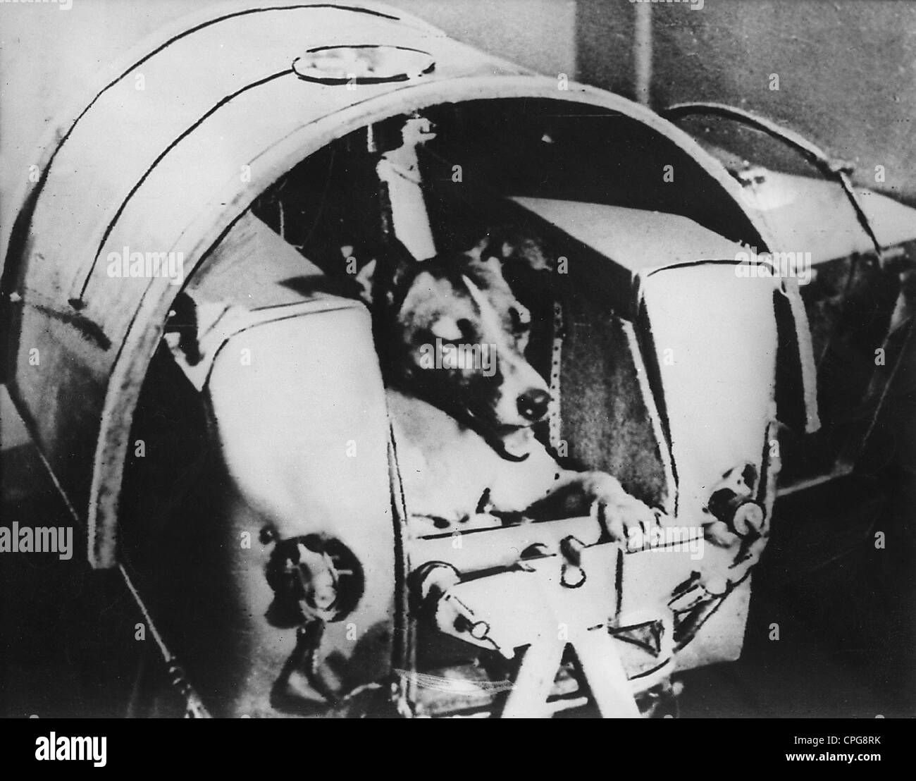 astronautics, animal, USSR, she dog Laica in pressurized cabin of Sputnik II, 1957, Additional-Rights-Clearences - Stock Image