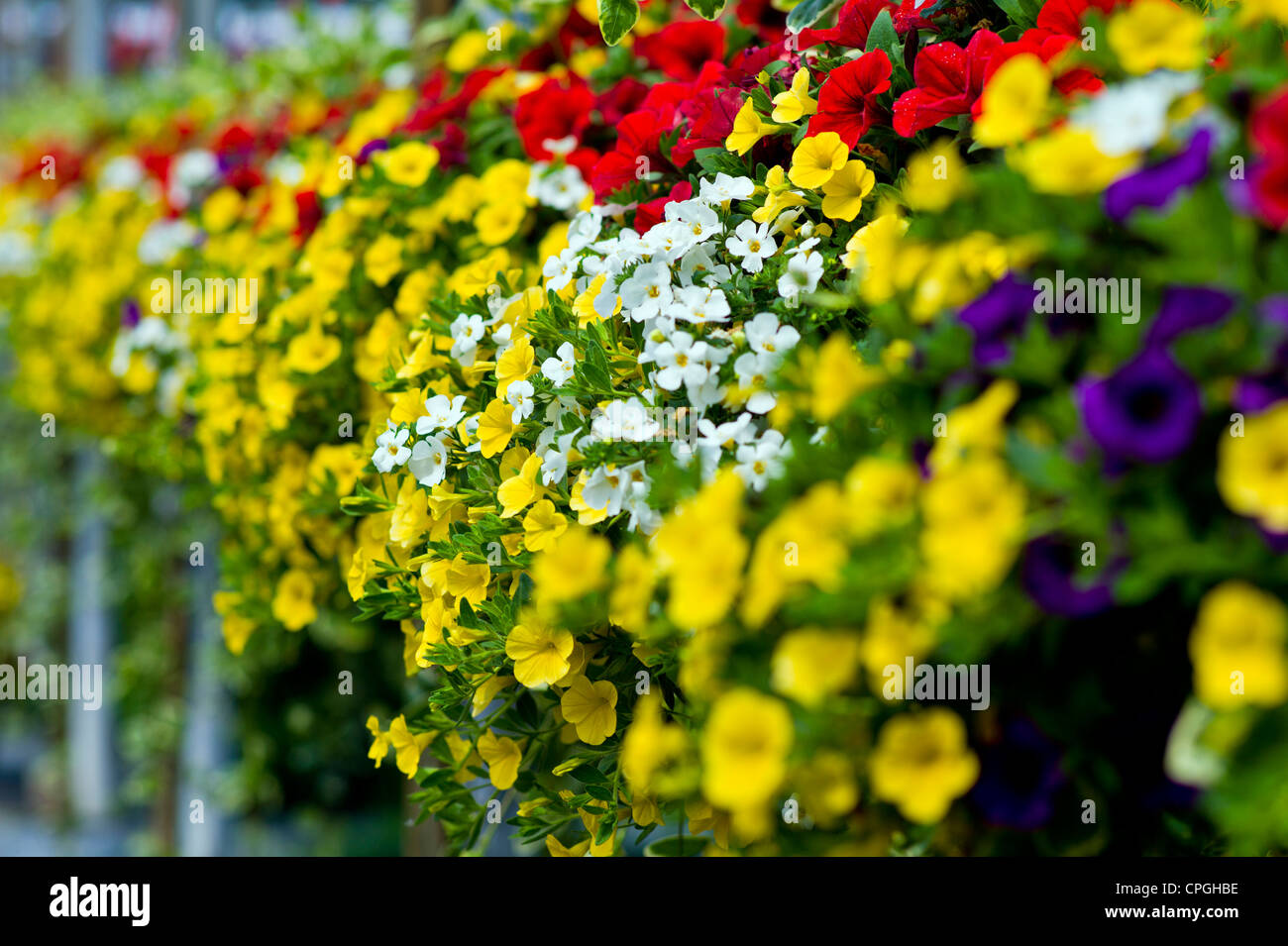 Fresh spring flowers and hanging plants for sale at a small town nursery. - Stock Image