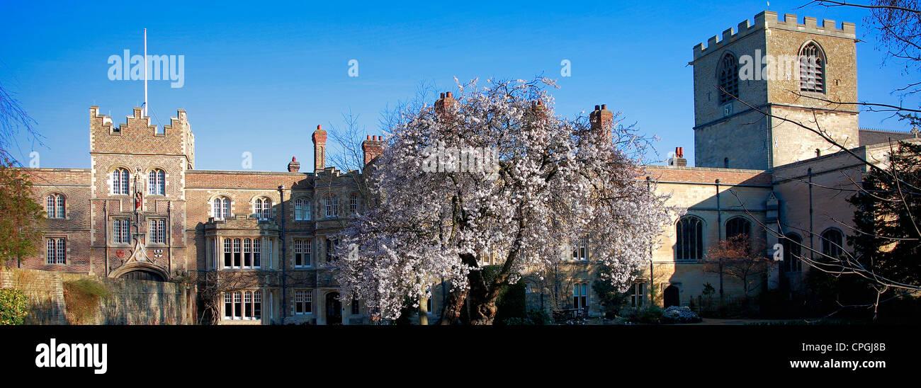 A Cherry Tree in the grounds of Jesus College, University City of Cambridge, Cambridgeshire, England, UK - Stock Image