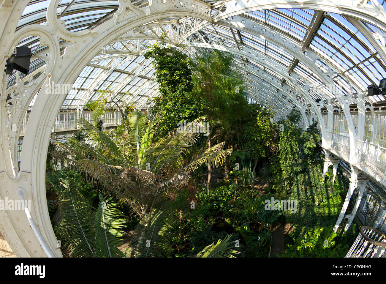 Temperate House interior, Kew Royal Botanic Gardens, London, England, UK, United Kingdom, GB, Great Britain, British - Stock Image