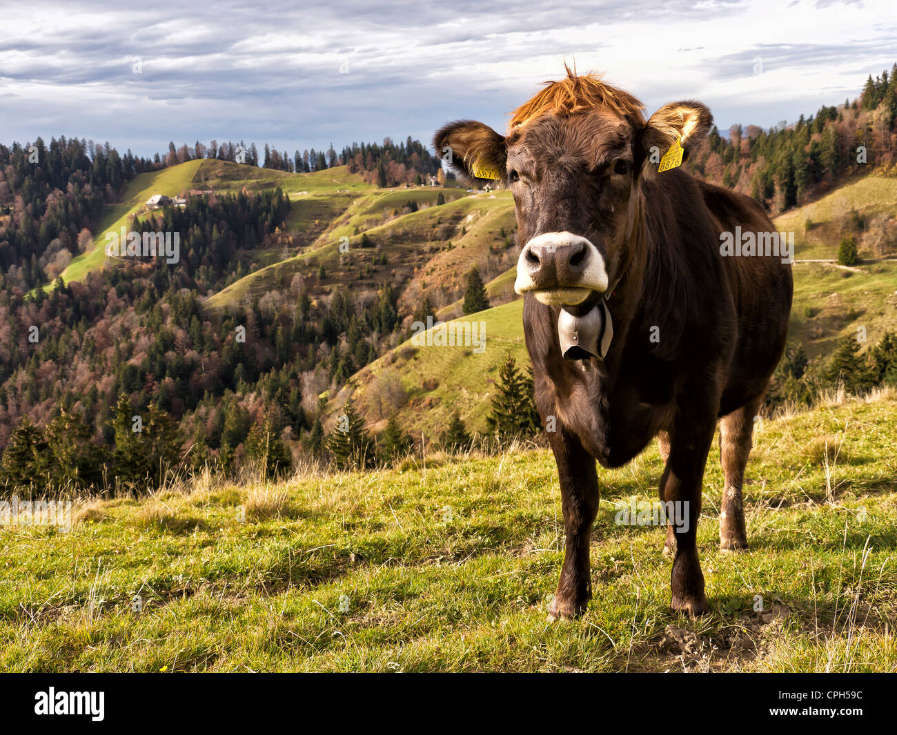 alp, shieling, alpine pasture, Emmental, agriculture, autumn, fall, canton Bern, cow, cattle, Lüderenalp, dairy, Stock Photo