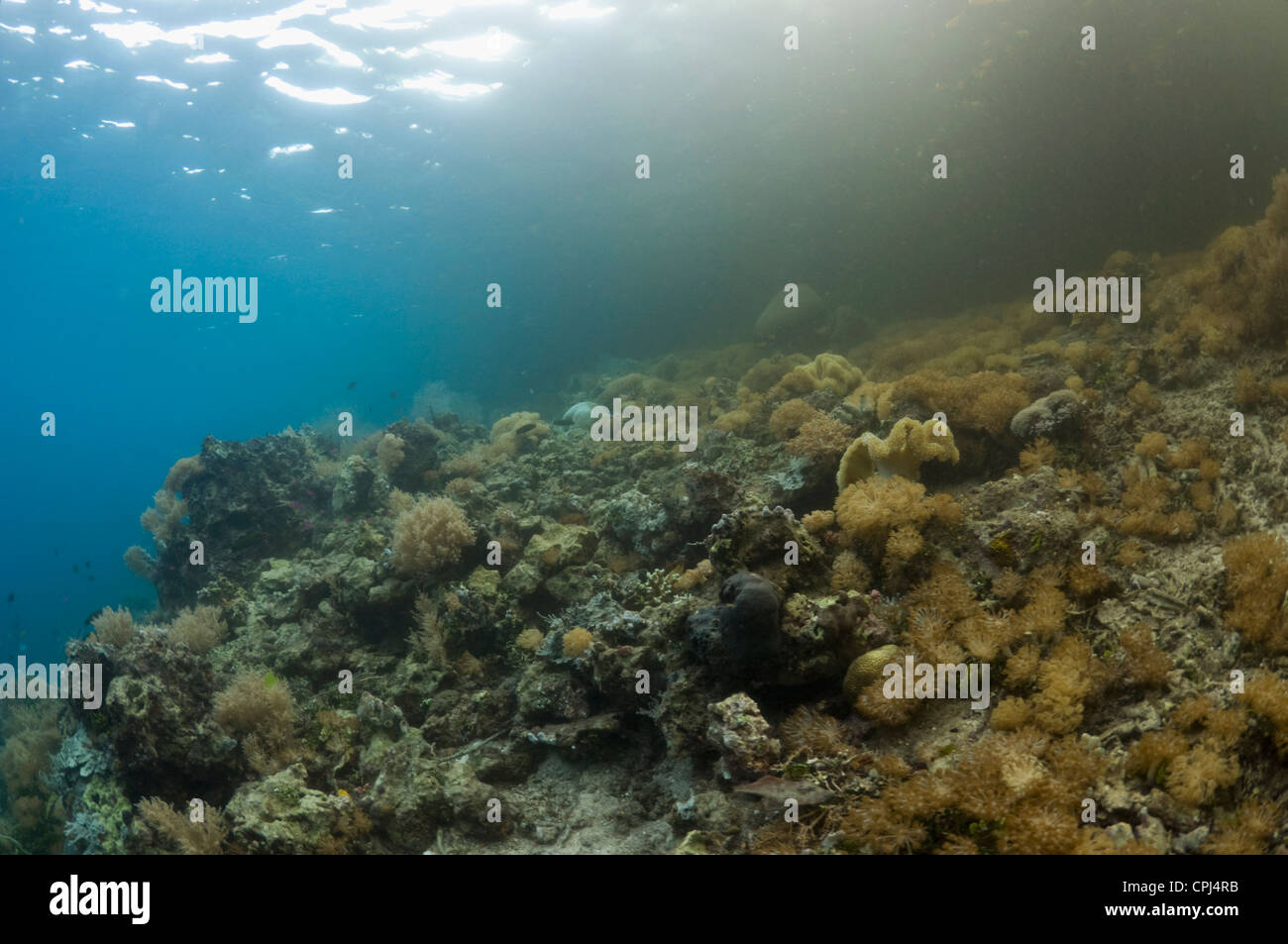 Tidal change of water causes dirty (nutrient rich) water to be flushed out of mangroves over coral reef. Raja Ampat, - Stock Image