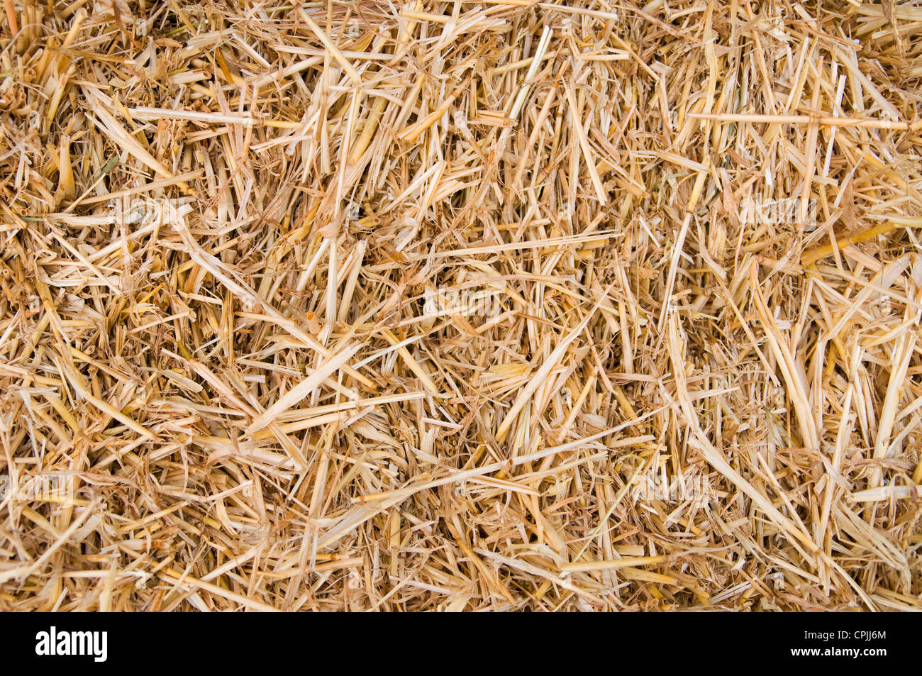 Golden straw texture background, close up - Stock Image