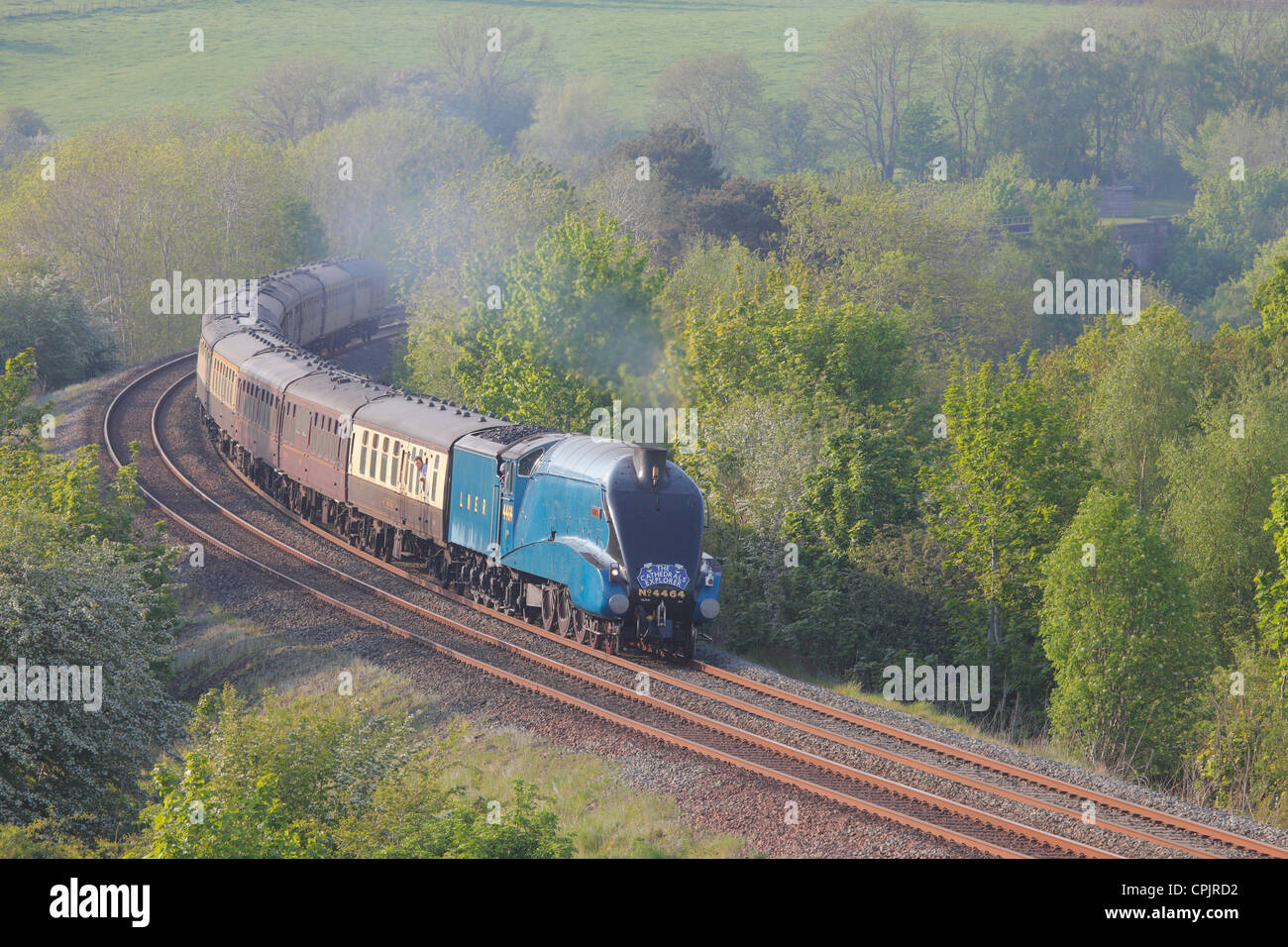 The Cathedrals Explorer, LNER Class A4 4464 Bittern Steam train near Low Baron Wood Farm Armathwaite Eden Valley, - Stock Image