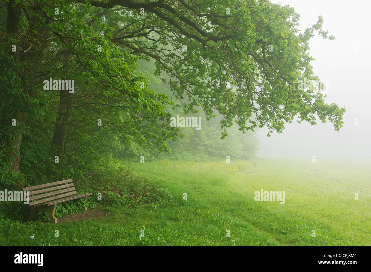 Forest in morning fog. the fog creates a mystical atmosphere. the trees in the background appear shaded - Stock Image