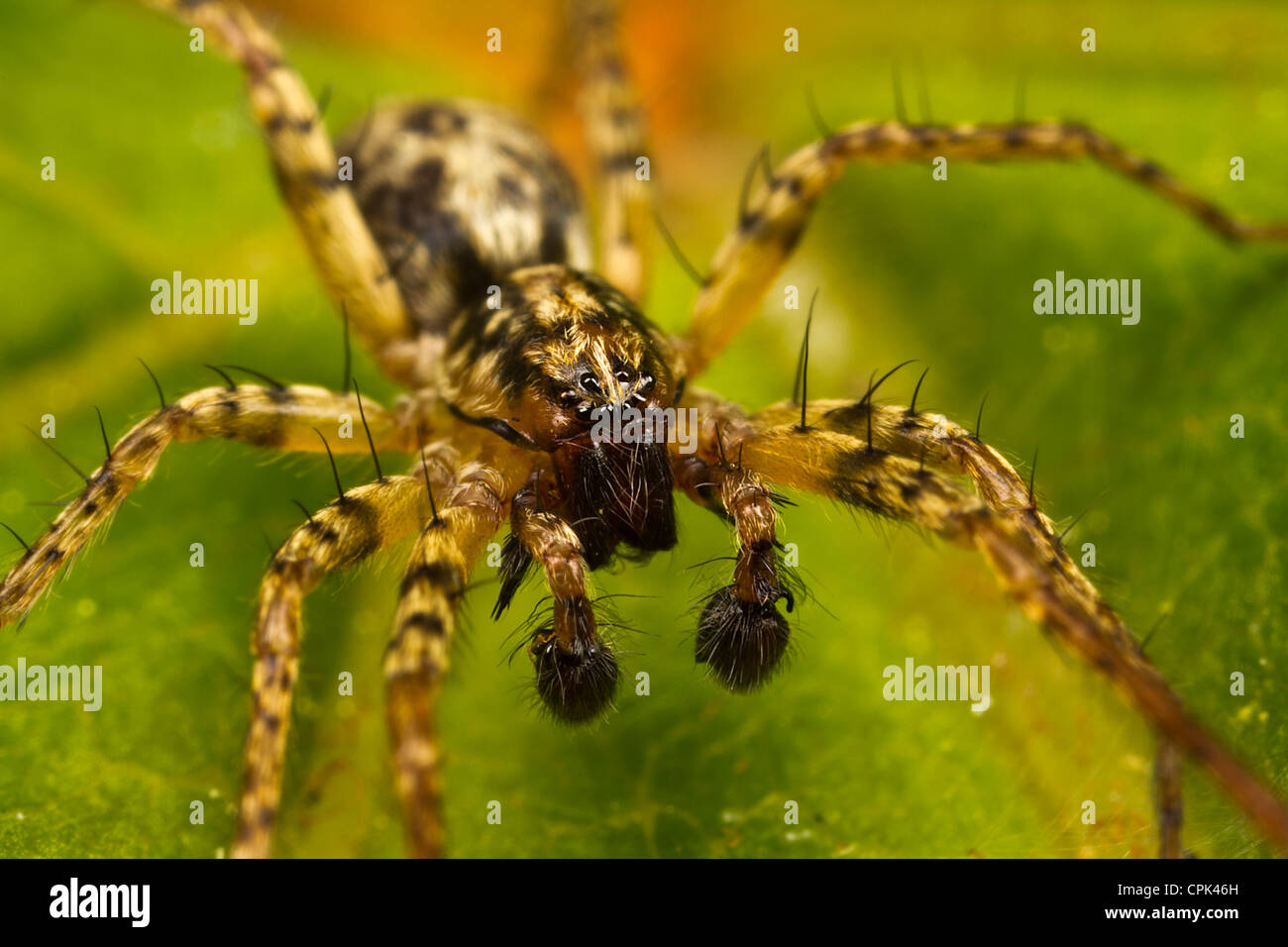A small spider Stock Photo