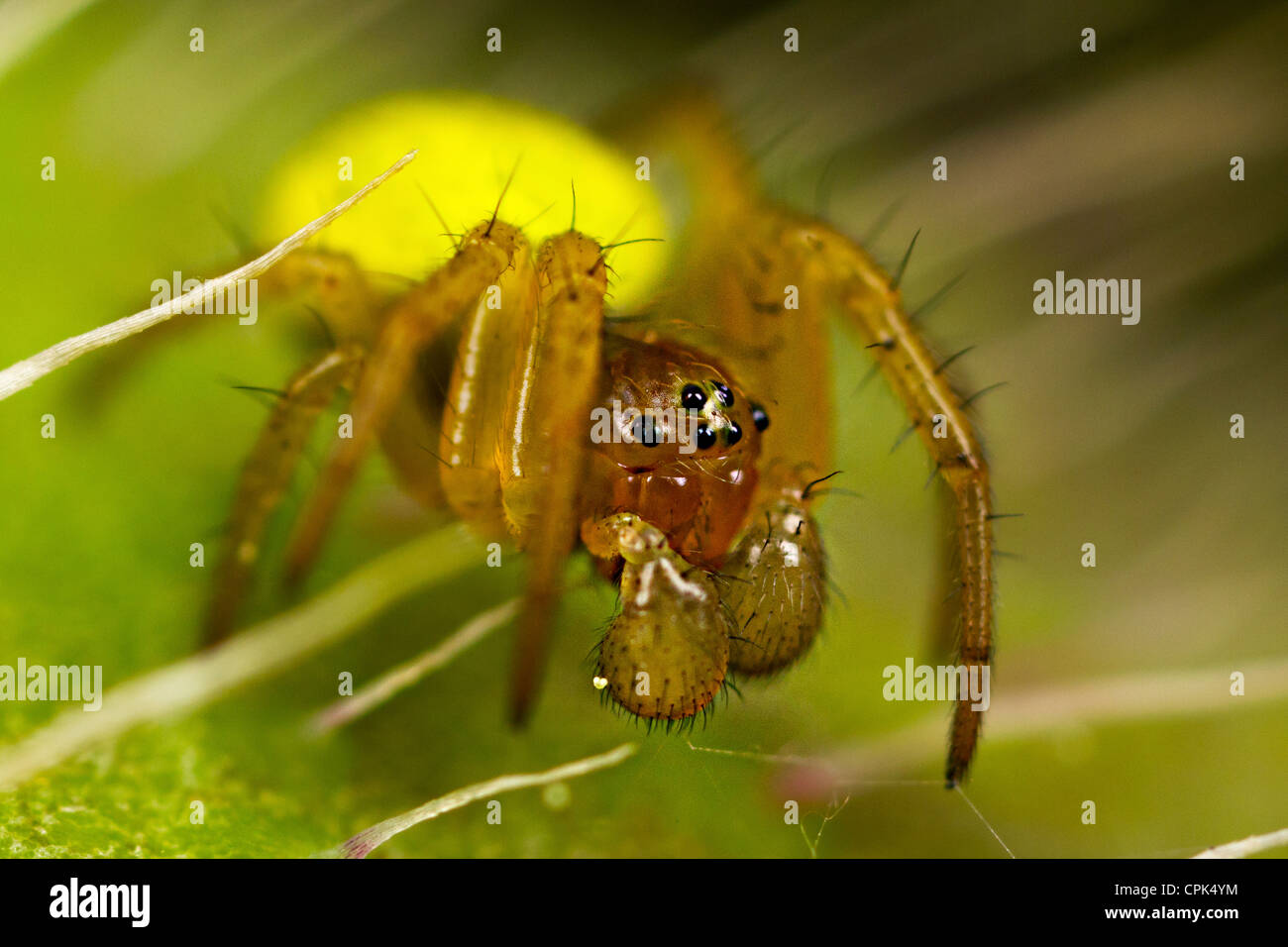 A small green spider Stock Photo