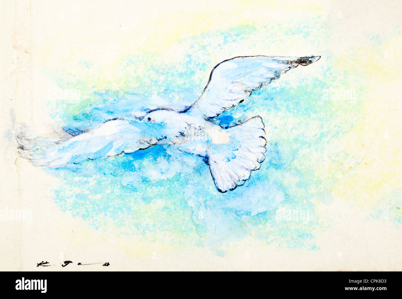 White dove - pastel chalk on paper by Kurt Tessmann - Stock Image