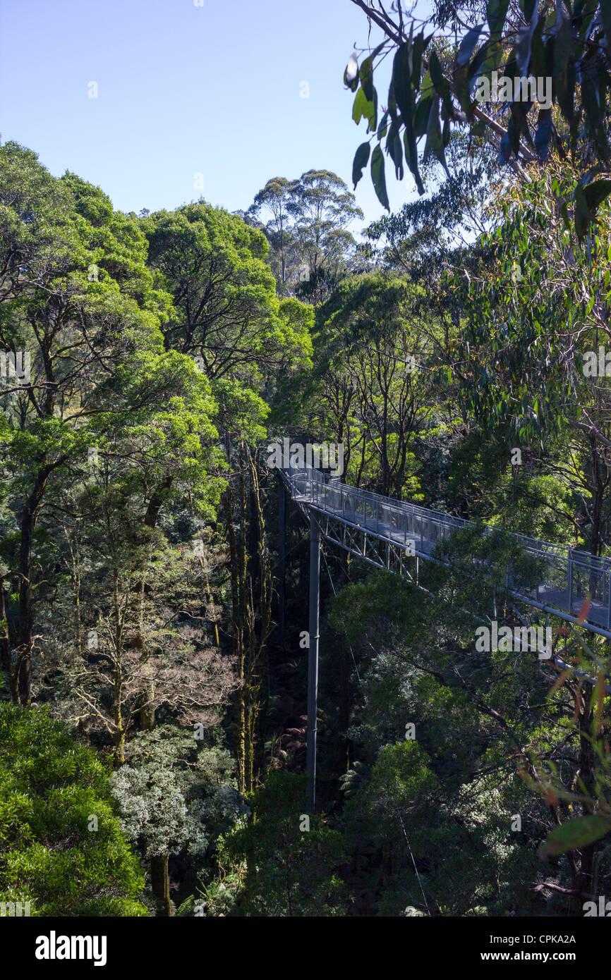 Otway Fly Treetop Walk, Great Otway National Park, Victoria, Australia - Stock Image