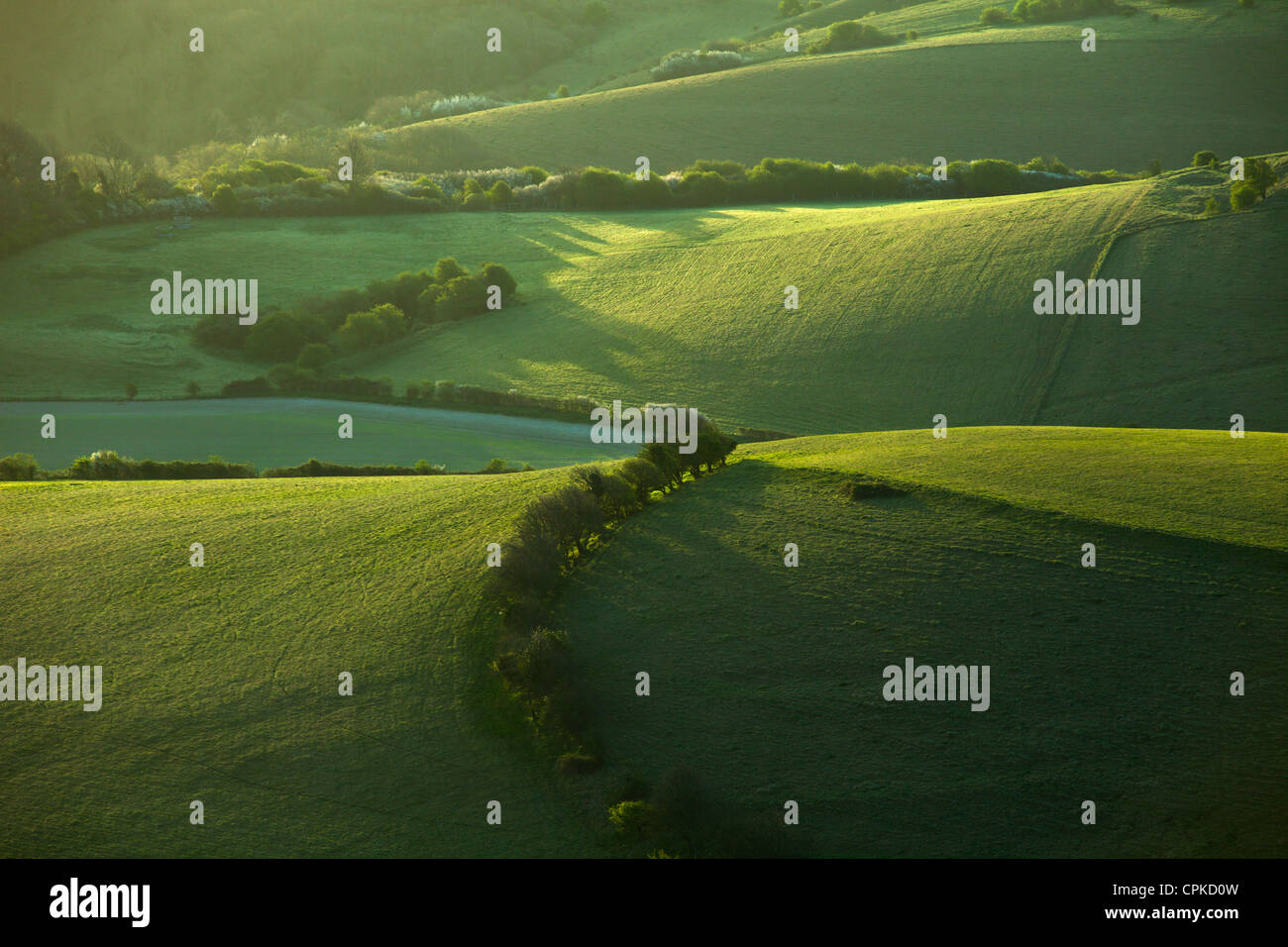 Spring morning in South Downs National Park in East Sussex, England. - Stock Image