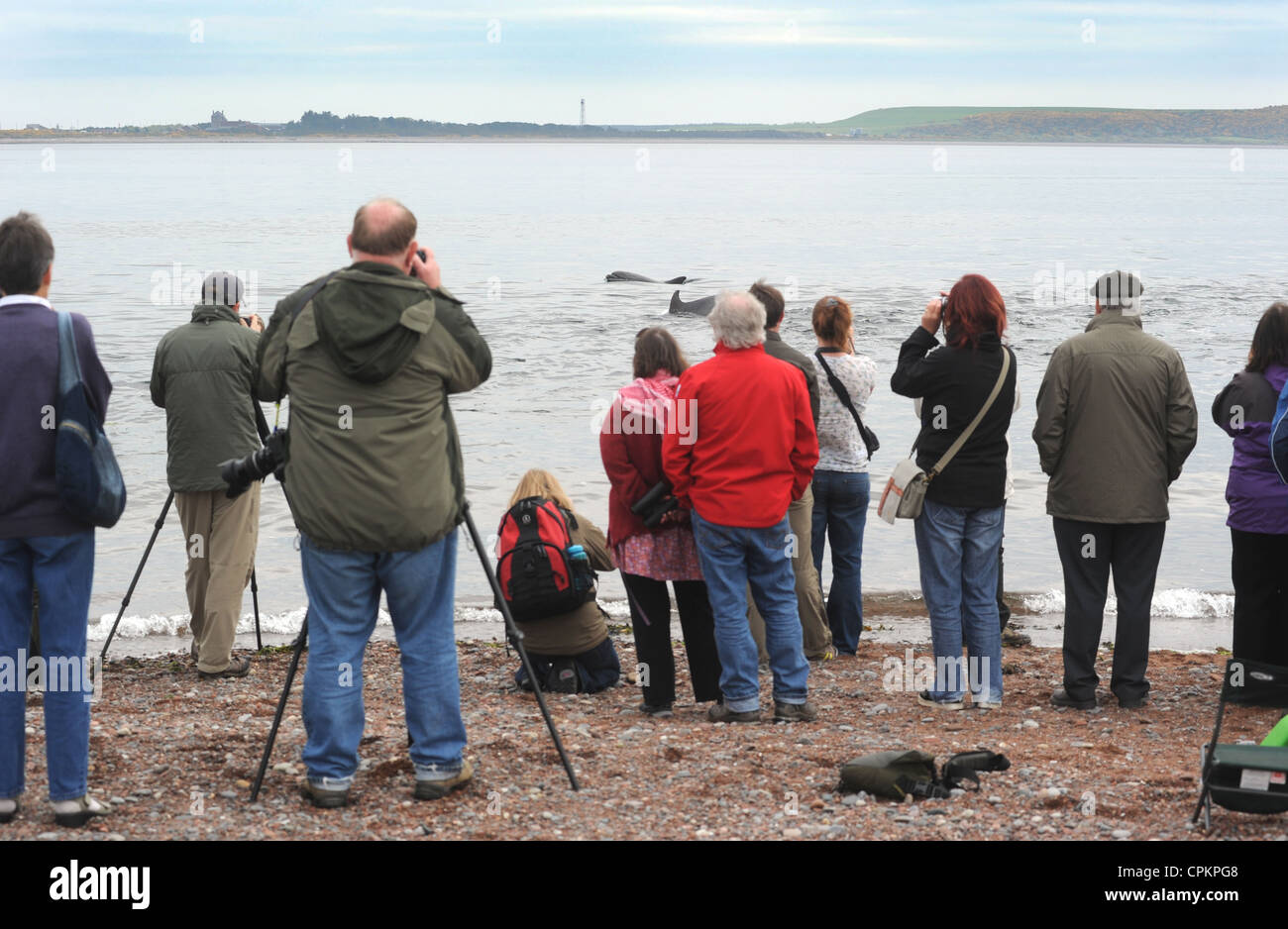 WILDLIFE WATCHERS GATHER TO SEE WILD DOLPHINS SWIMMING AT CHANONRY POINT NEAR ROSEMARKIE ON THE MORAY FIRTH IN SCOTLAND Stock Photo
