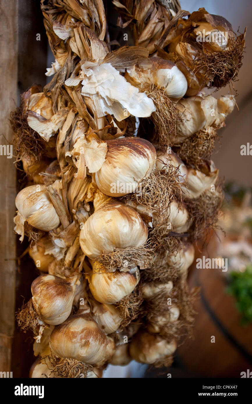 A bunch of garlic - Stock Image