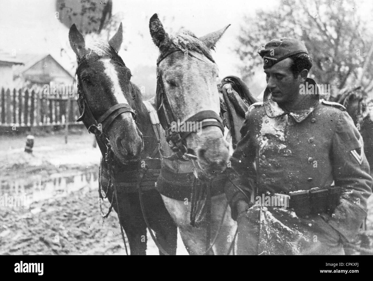 German Coachman Standing Next to his Horses, 1941 - Stock Image