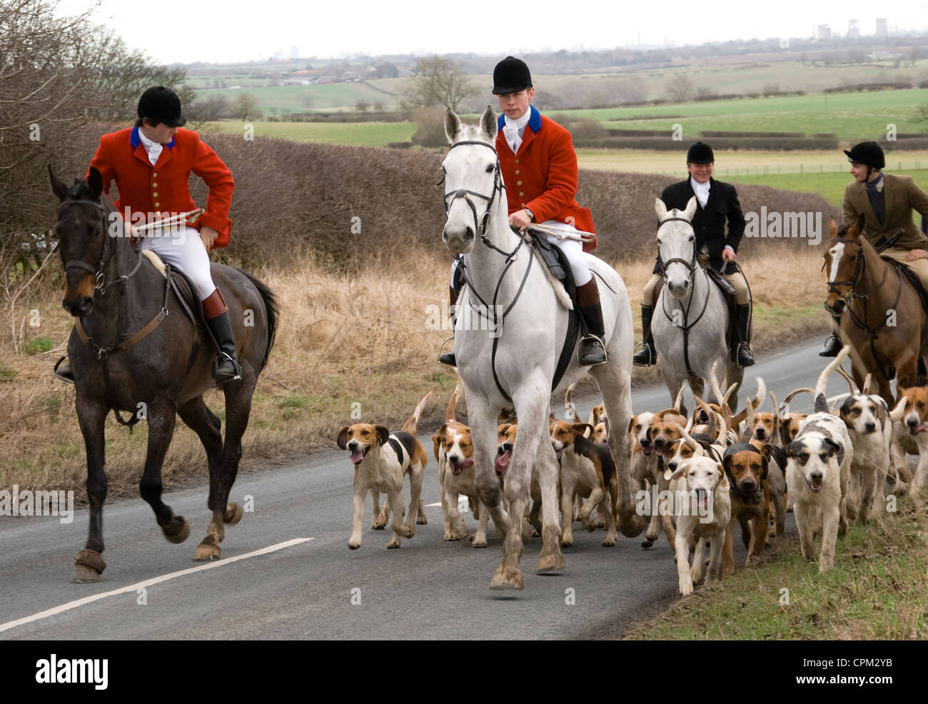 Master fox hunter leads the pack of hounds on roads around Great Stainton in County Durham - Stock Image
