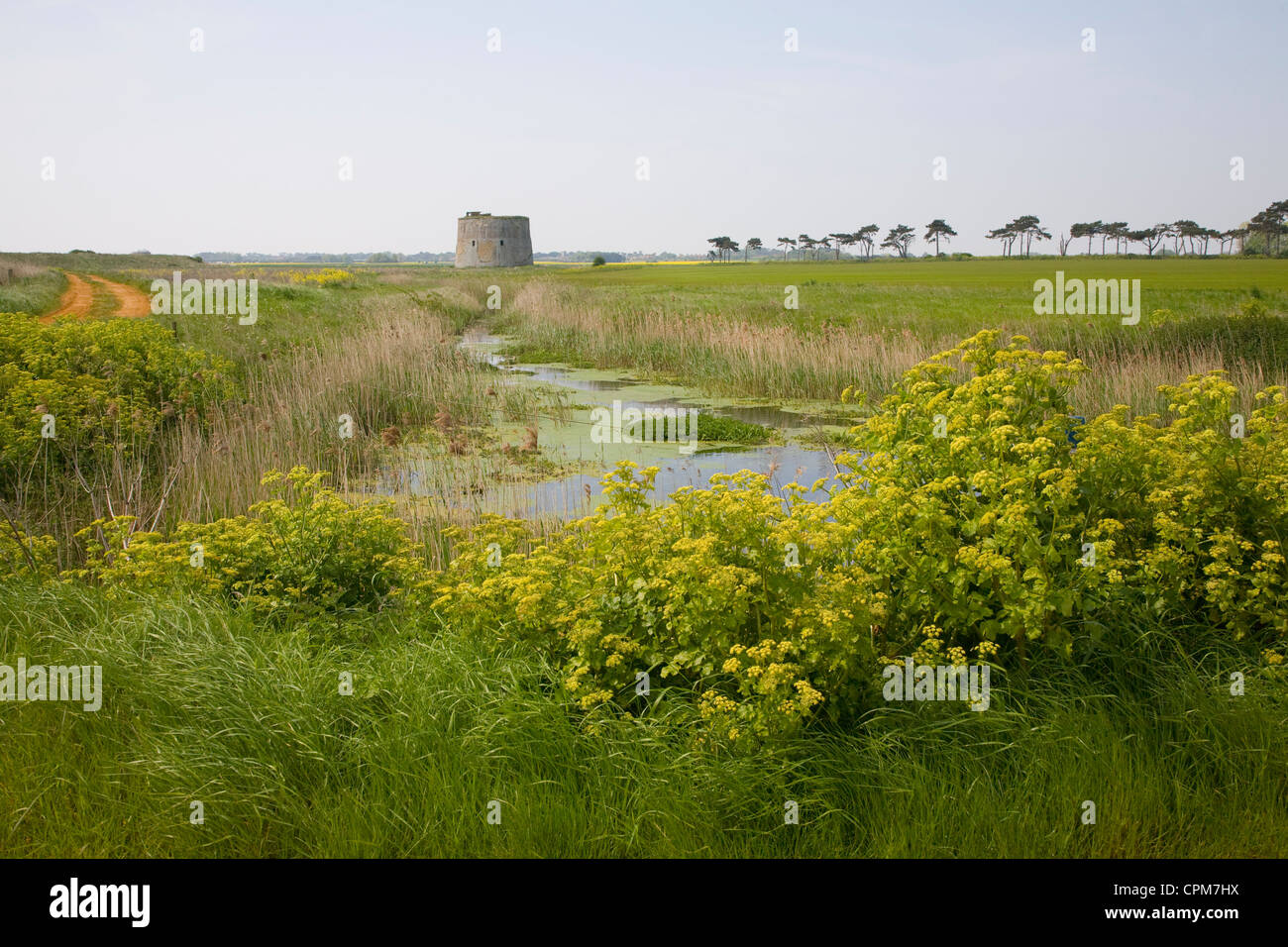 Drainage ditch draining marshes Alderton, Suffolk, England - Stock Image