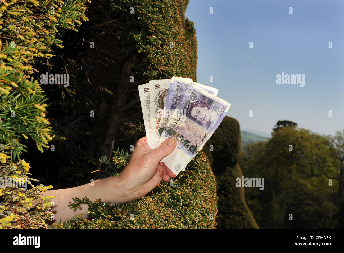 Cash on hedge - Stock Image