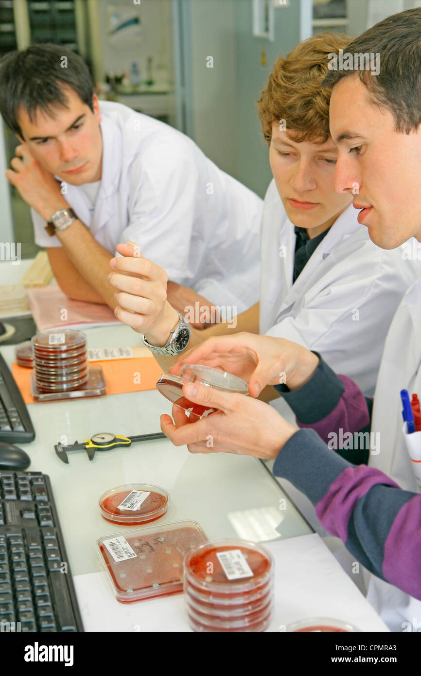 BACTERIOLOGY - Stock Image