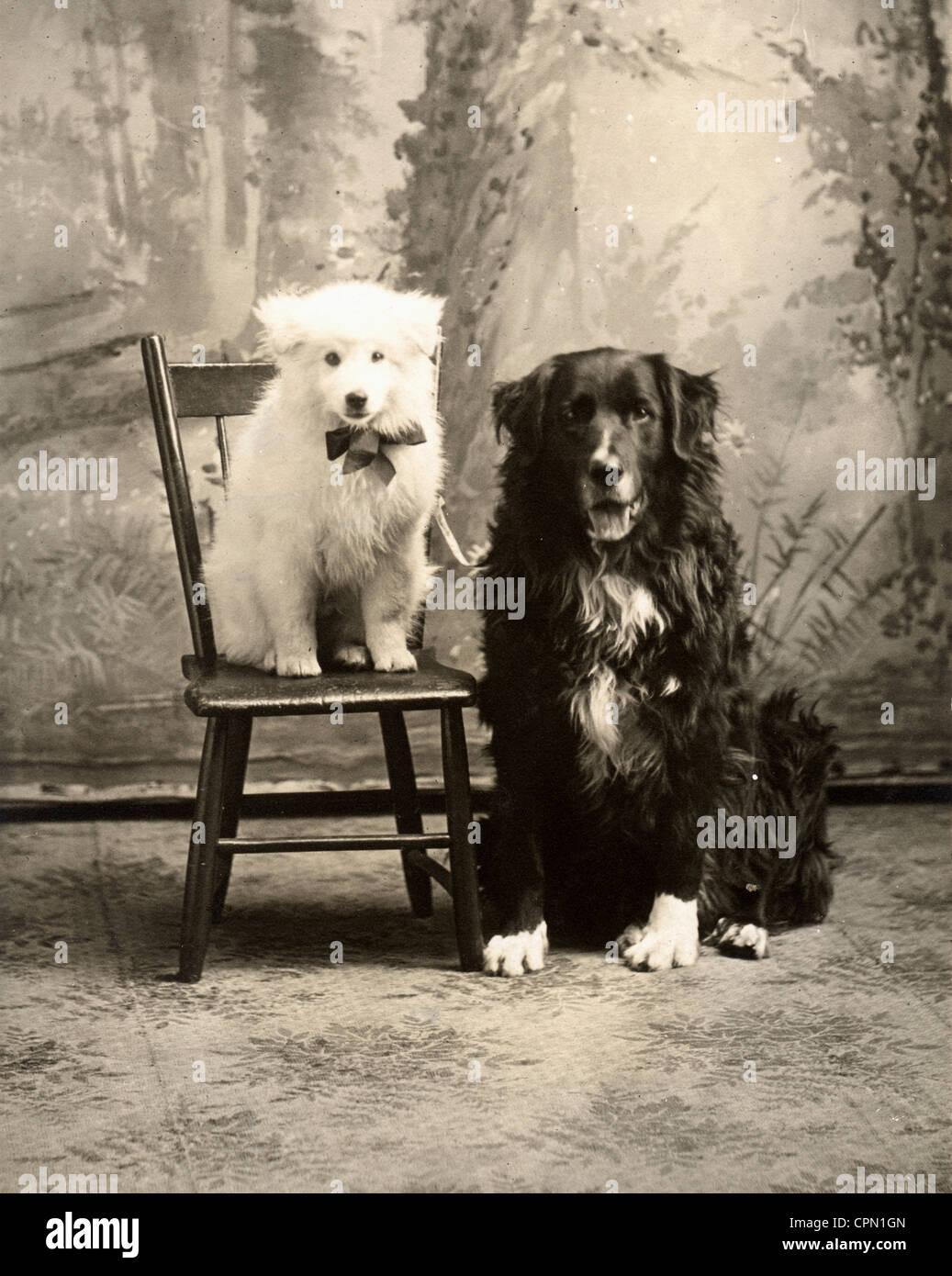 Adorable Dog Odd Couple - Stock Image