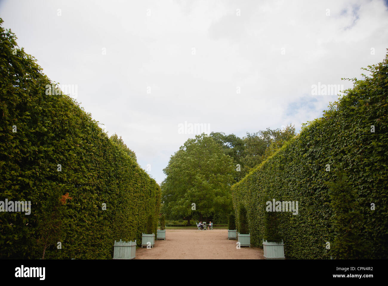 Hedges lining path in park - Stock Image
