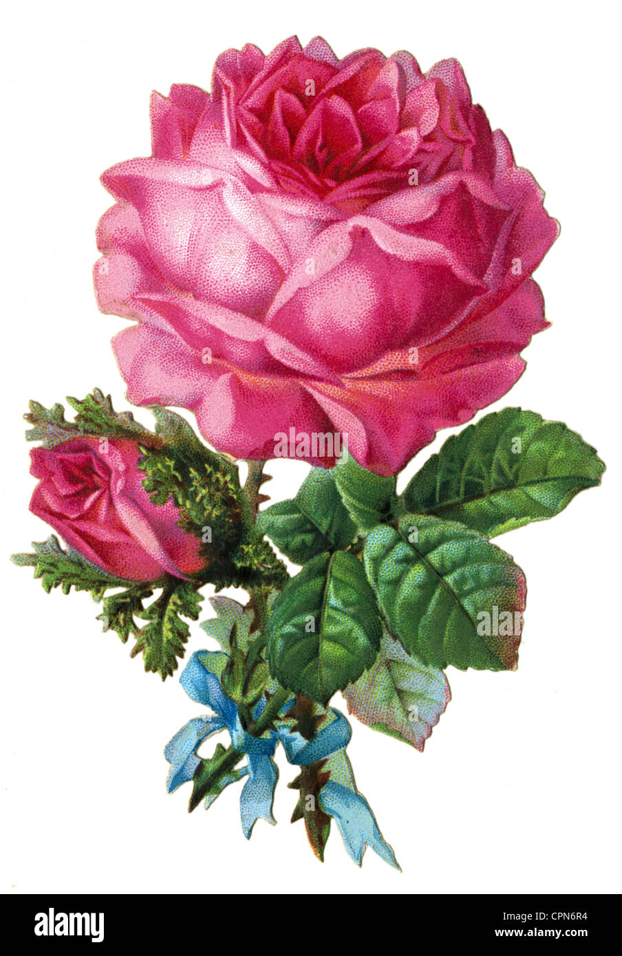 kitsch/cards/souvenir, rose, decoration, scrap-picture, Germany, circa 1885, Additional-Rights-Clearences-NA - Stock Image