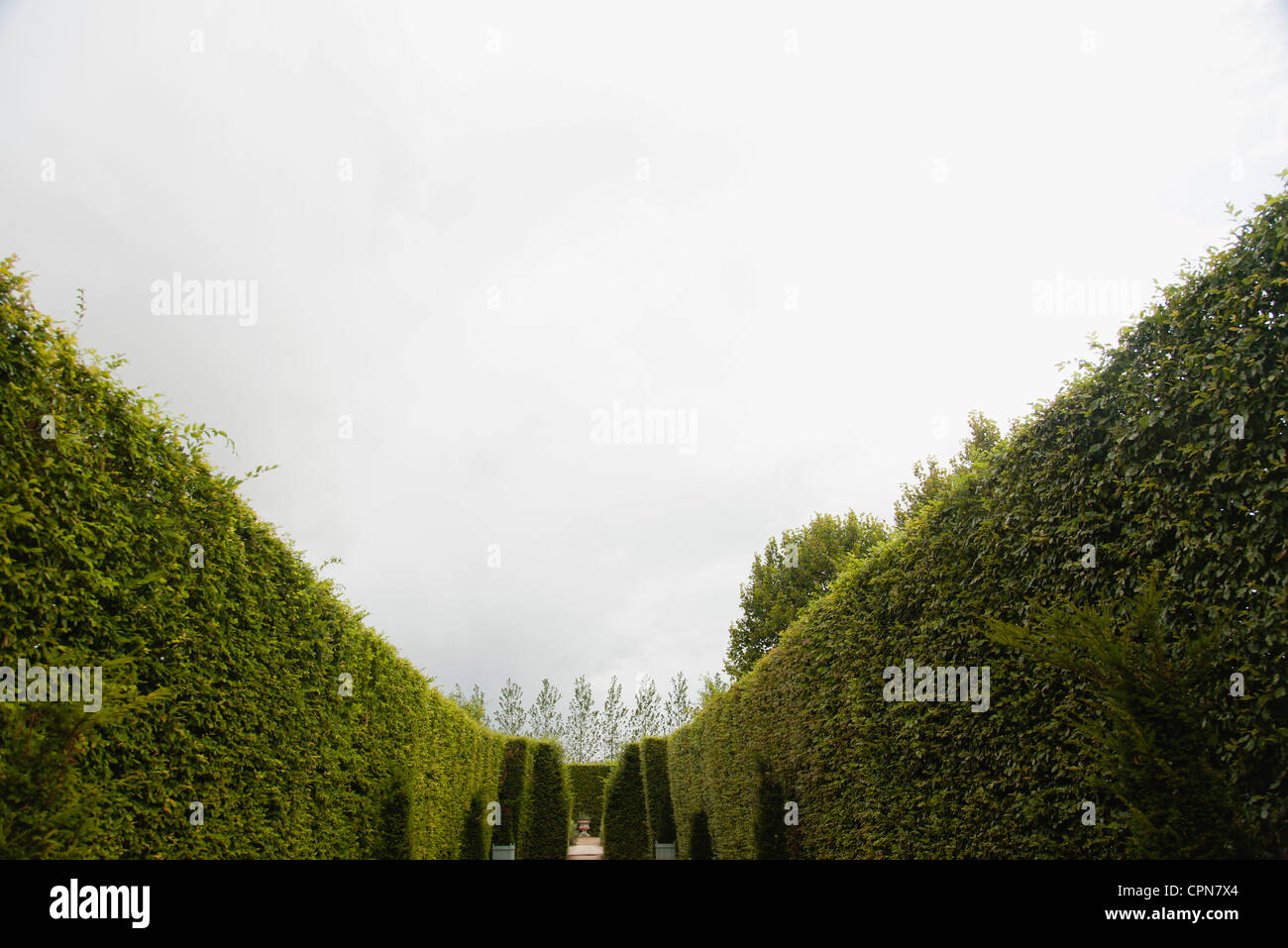 Tall hedges in garden - Stock Image