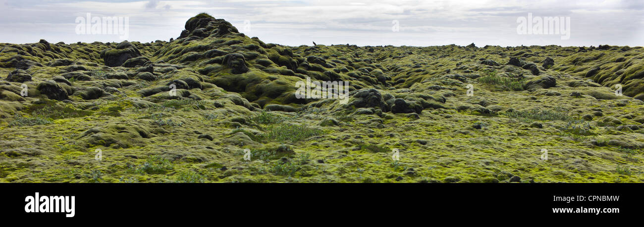 Panoramic view of moss-covered lava field, Iceland - Stock Image