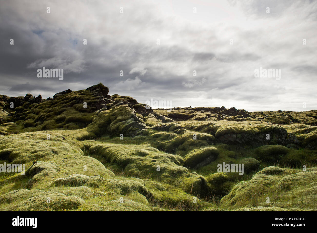 Moss-covered lava field, Iceland - Stock Image