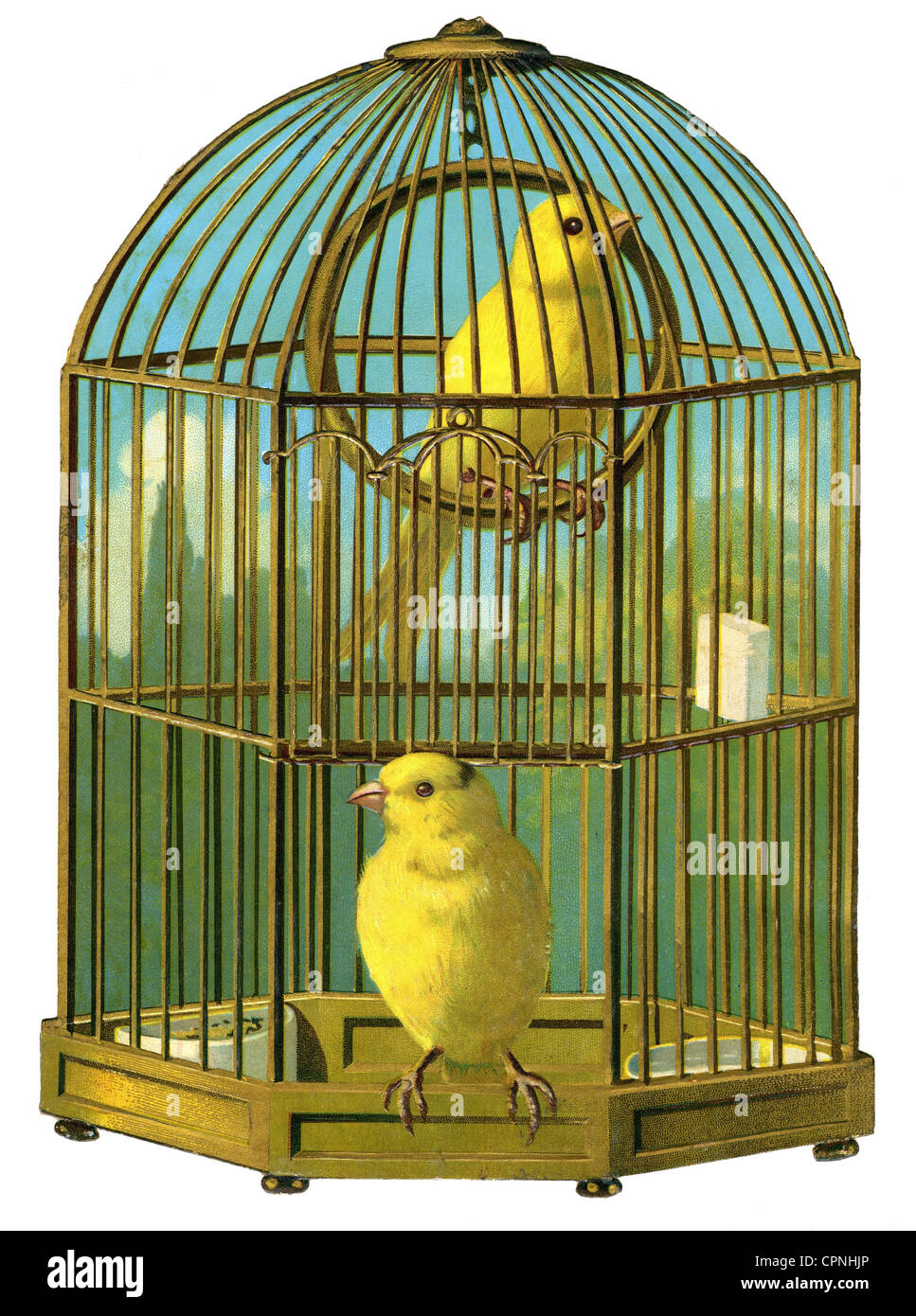 zoology / animals, birds, canary in cage, scrap-picture, Germany, circa 1880, Additional-Rights-Clearences-NA - Stock Image