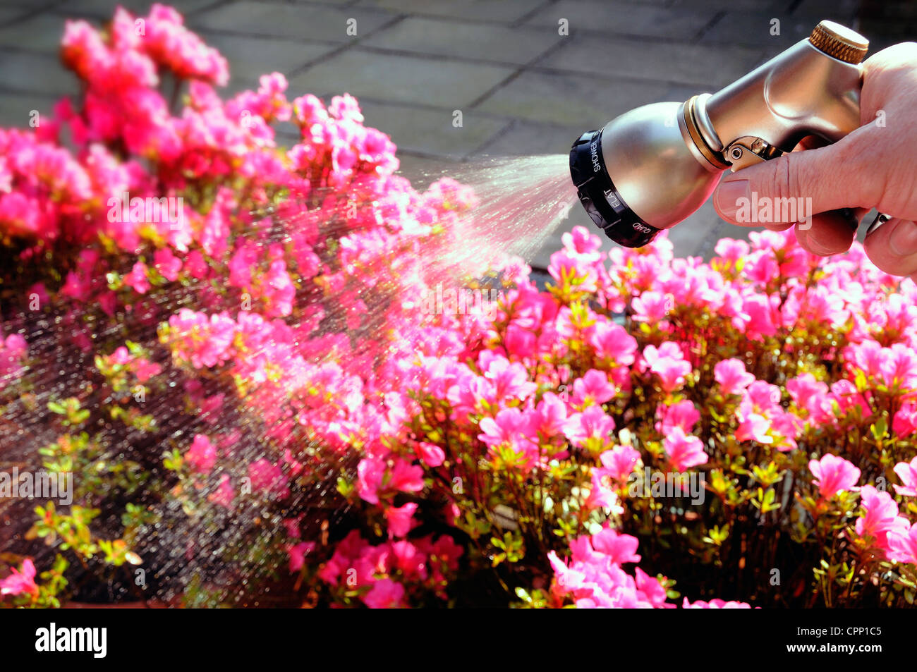 watering the flowers - Stock Image