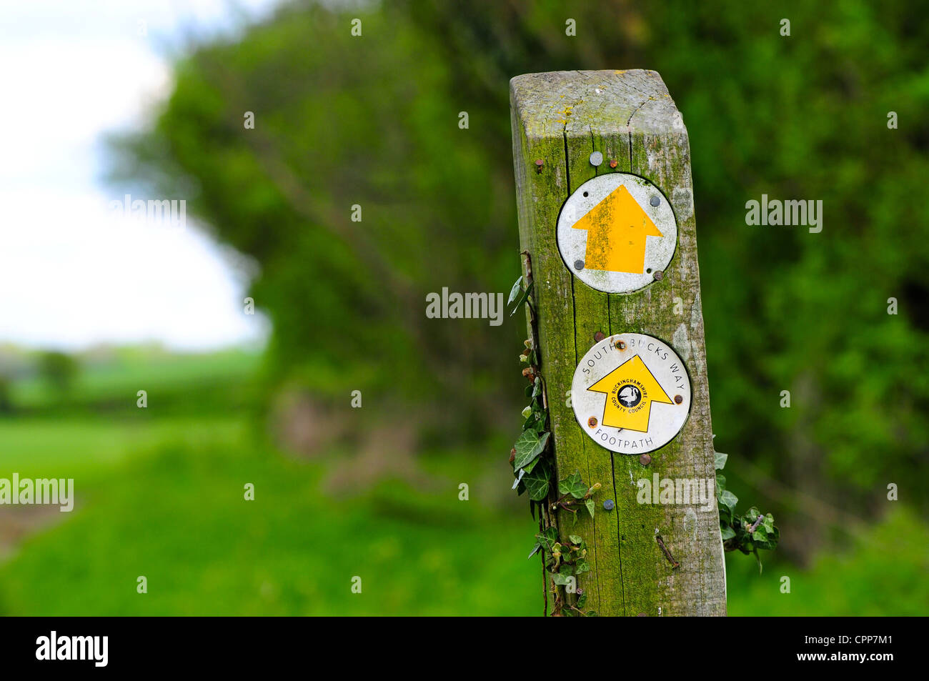 South Bucks Way footpath sign in the Chilterns, Buckinghamshire, UK - Stock Image