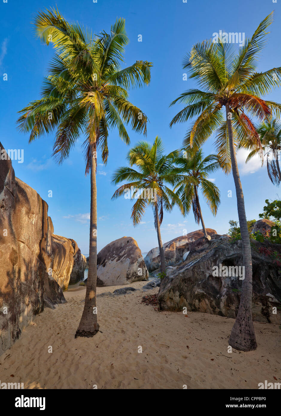 Virgin Gorda, British Virgin Islands, Caribbean Plam trees on the beach among the granite boulders at The Crawl - Stock Image