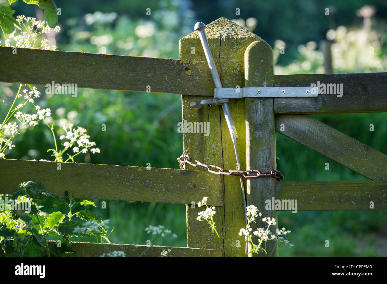 Evening light on a wooden farm gate - Stock Image