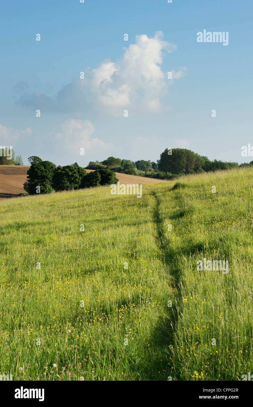 Path through a Defra old hay wildflower meadow. Hook Norton, Oxfordshire, England - Stock Image