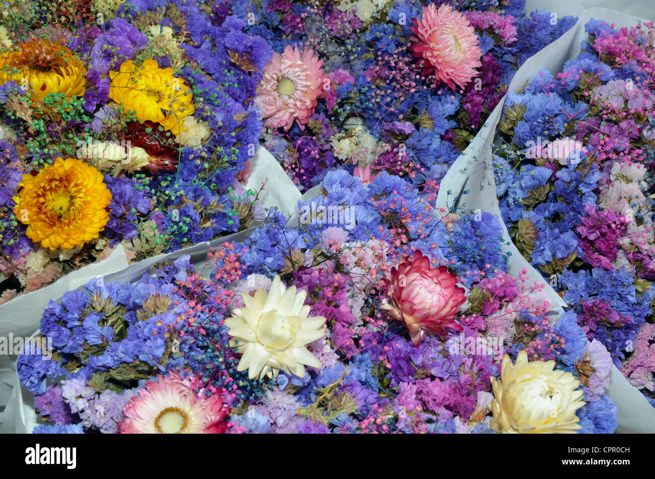 Colorful spring bouquet of flowers - Stock Image