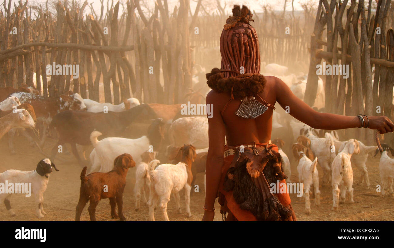 The Himba Goatherd shepherds her flock into the safety of the kraal at sunset - Stock Image