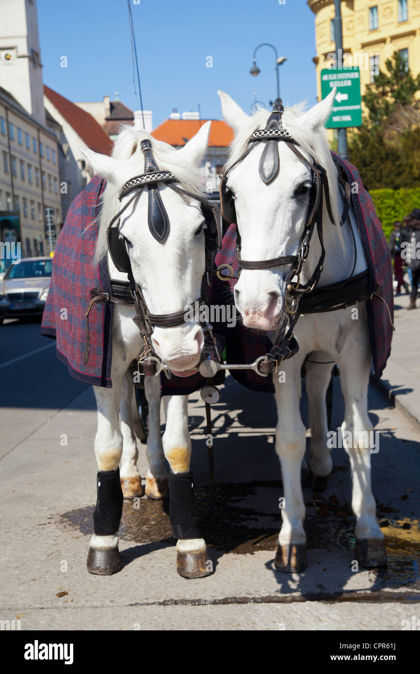 Fiaker Carriage Horses  Vienna, Austria - Stock Image